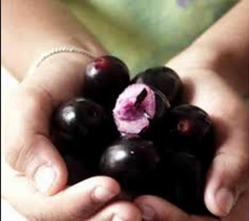 जामुन फल के घरेलू प्रयोग