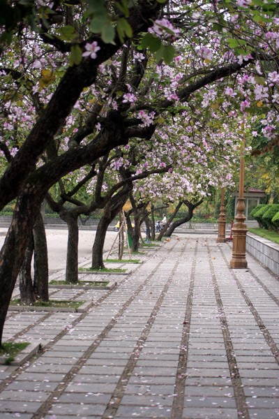 Three beautiful flower gardens in Ha noi