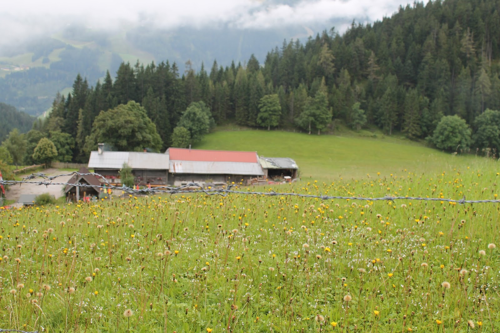 Halseralm Pichl Enns Dachstein-Tauern Region