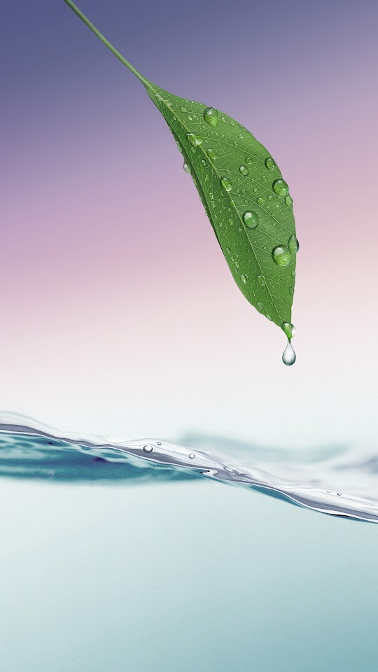 Green Leaf Dew HD Water Lockscreen  Galaxy Note HD Wallpaper