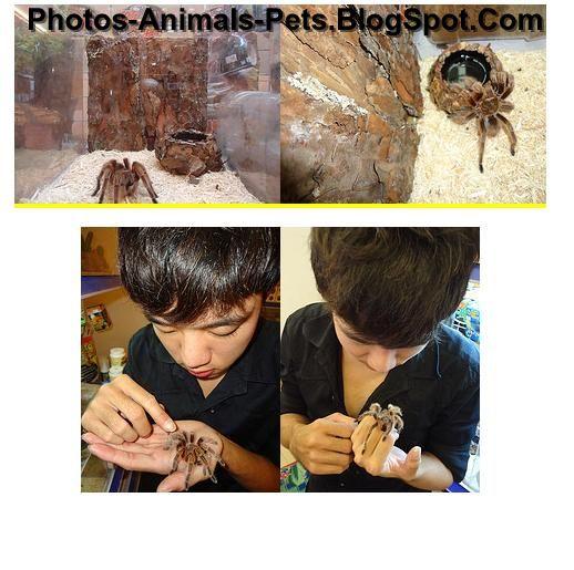 http://1.bp.blogspot.com/-zchieuF01TE/TcpFFc8j8NI/AAAAAAAABCY/XjsuIDv8RvU/s1600/tarantula%2Bspider_0005.JPG