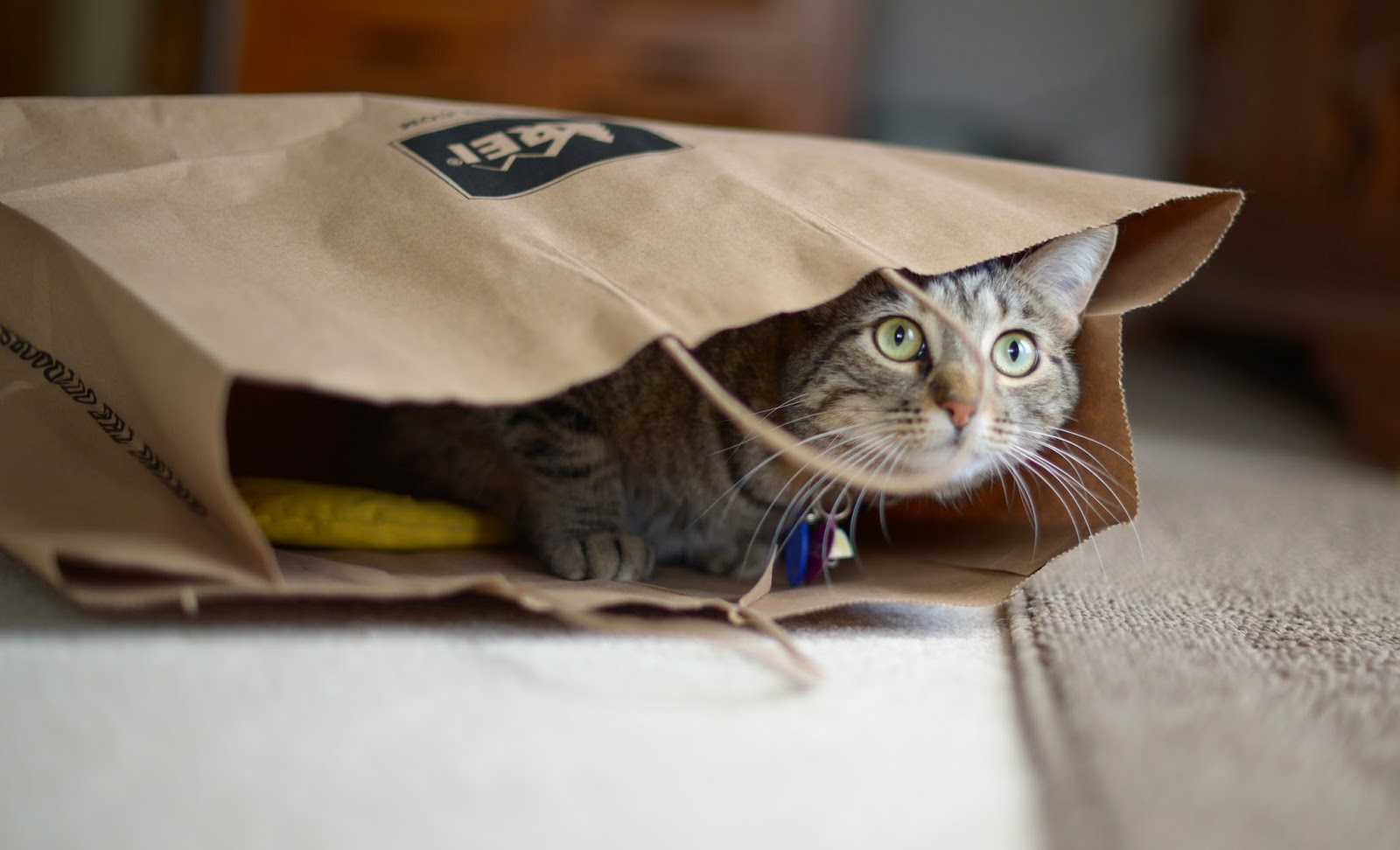 Image result for cat with paper bag