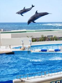 ものすごい跳躍力のイルカの写真
