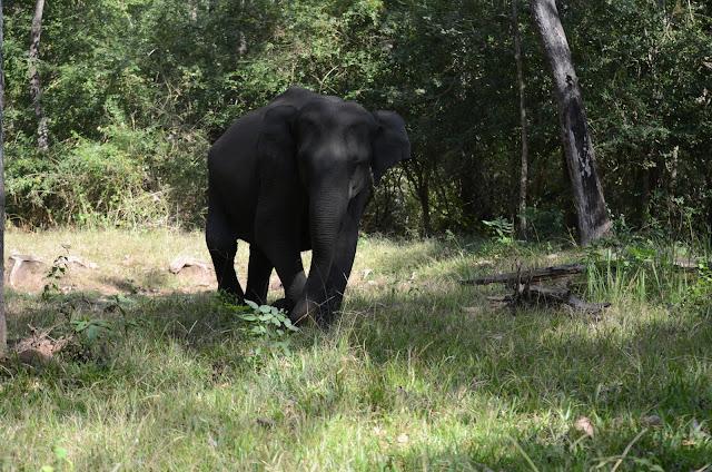 elephant attack