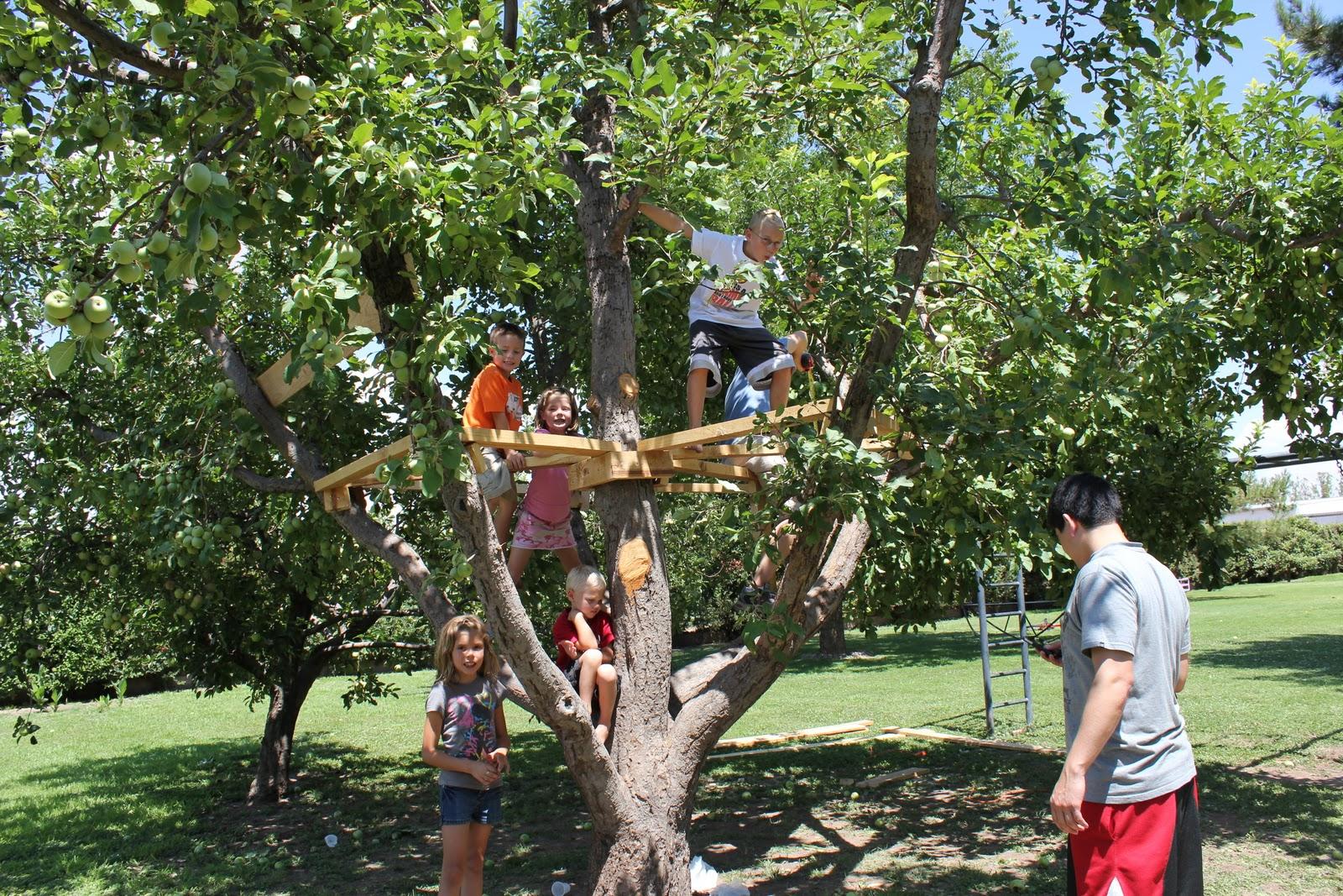 view einfluss von bäumen auf die durchlüftung von innerstädtischen straßenschluchten