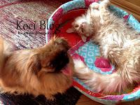 nowe łóżeczko dla psa