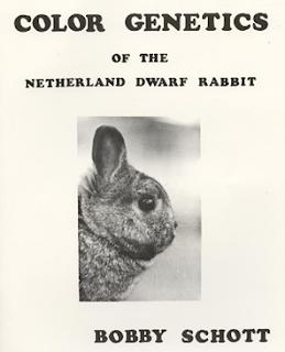 breeding kelinci netherland dwarf