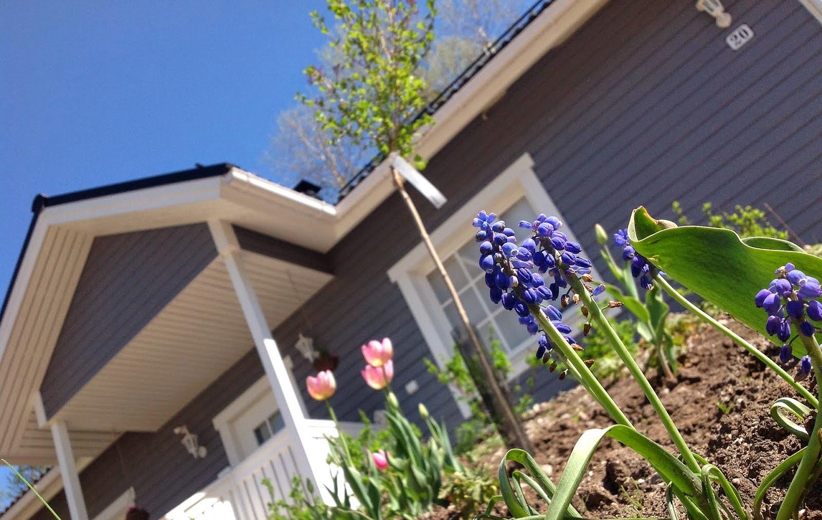 Tästä puutarhablogiini: Mutainen mustikkamäki