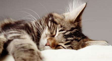 Gatito dormilon
