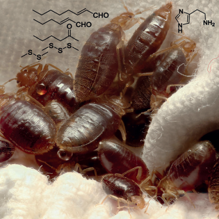 http://www.wired.com/2014/12/building-a-better-bed-bug-trap/