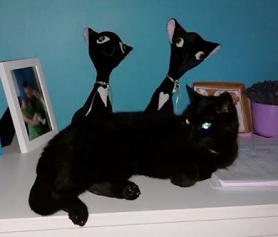 drugie życie szyjątak kotki