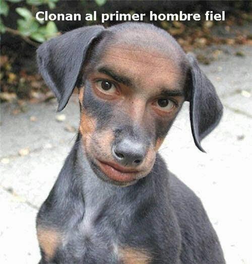 Clonan primer hombre fiel