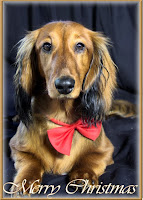 http://www.redbubble.com/people/sassyg/works/10989423-a-very-doxie-christmas-19?c=228724-long-dogs&p=greeting-card