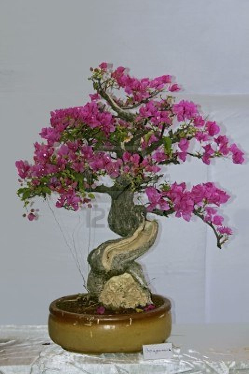 World39s Most Amazing Things Amazing Bonsai Flower And Fruit Trees
