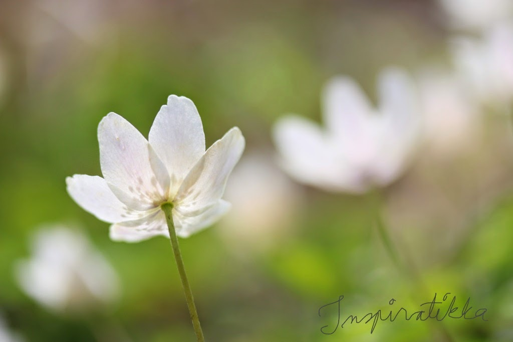 kevät-aspekti