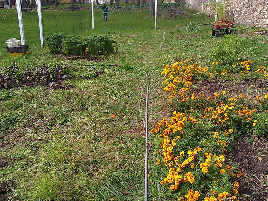 mccollum orchards fall garden clean up and winterizing the hopsyard