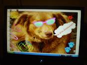Brenda, my dog fofíssima