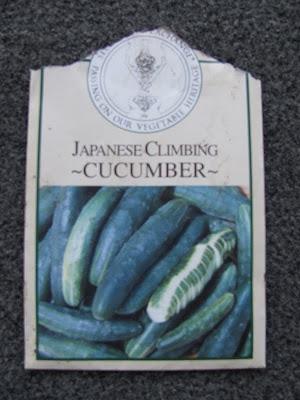 Japanese Climbing Cucumber