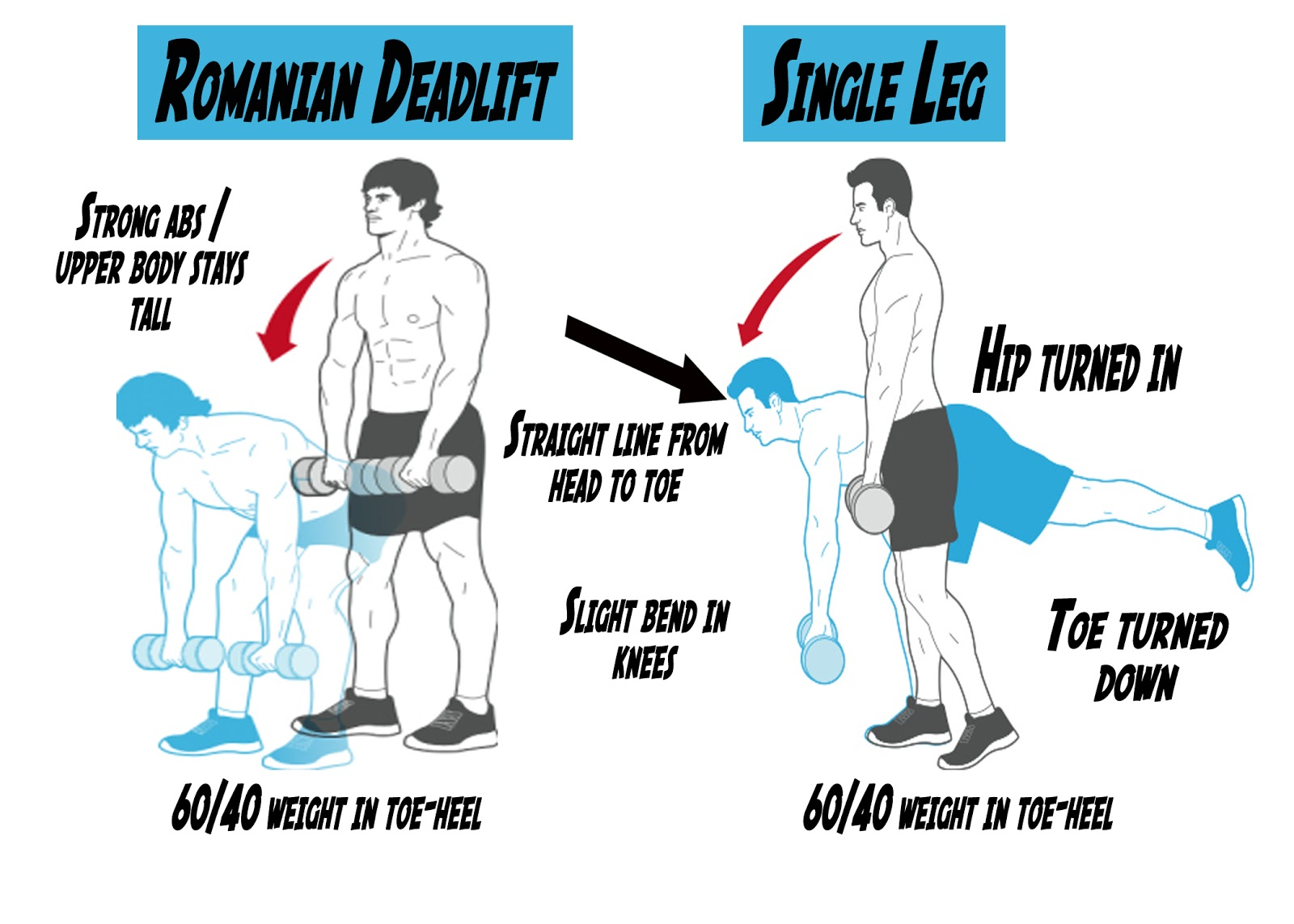 Deadlift variations sumo stiff legged and romanian romanian deadlift falaconquin