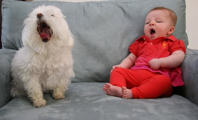 Funny baby and pet expression Pictures to Download