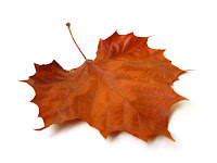 fallen brown maple leaf