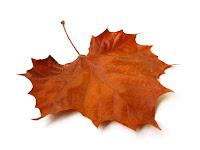 fallen brown maple leaf