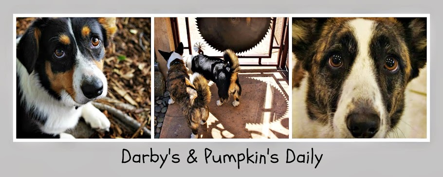 DARBY'S & PUMPKIN'S DAILY