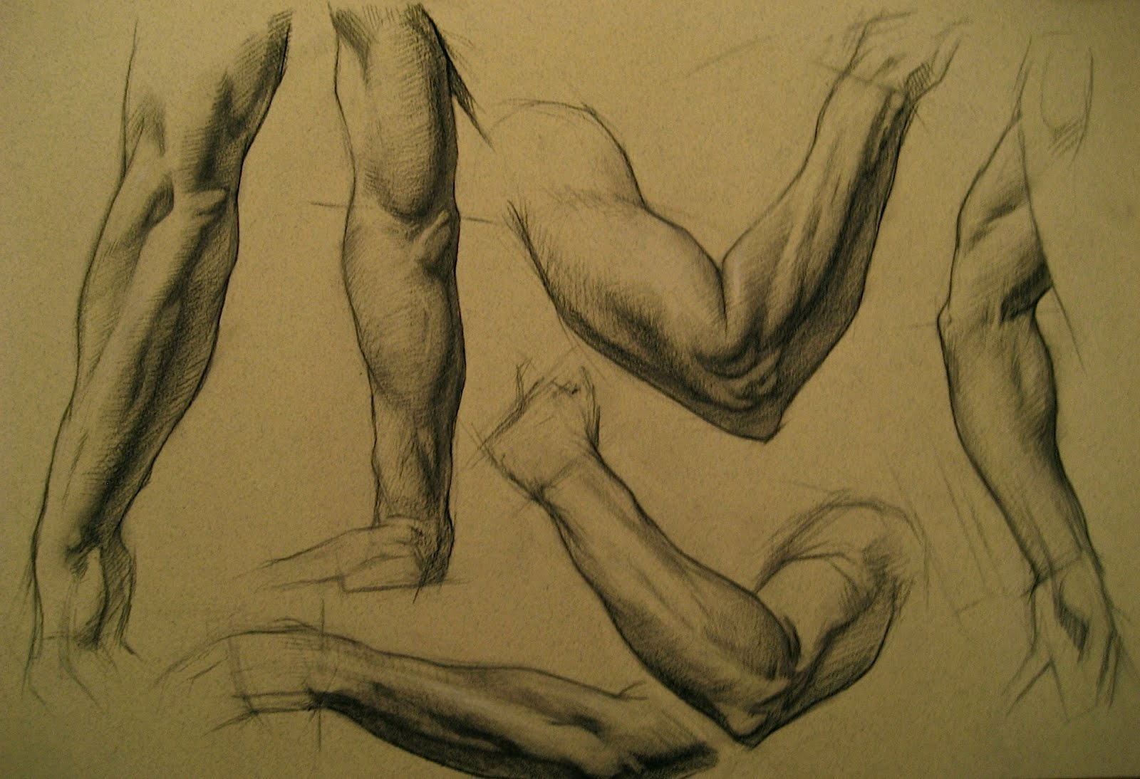 Keith Catalano\'s Life Drawing Blog: The Arm!