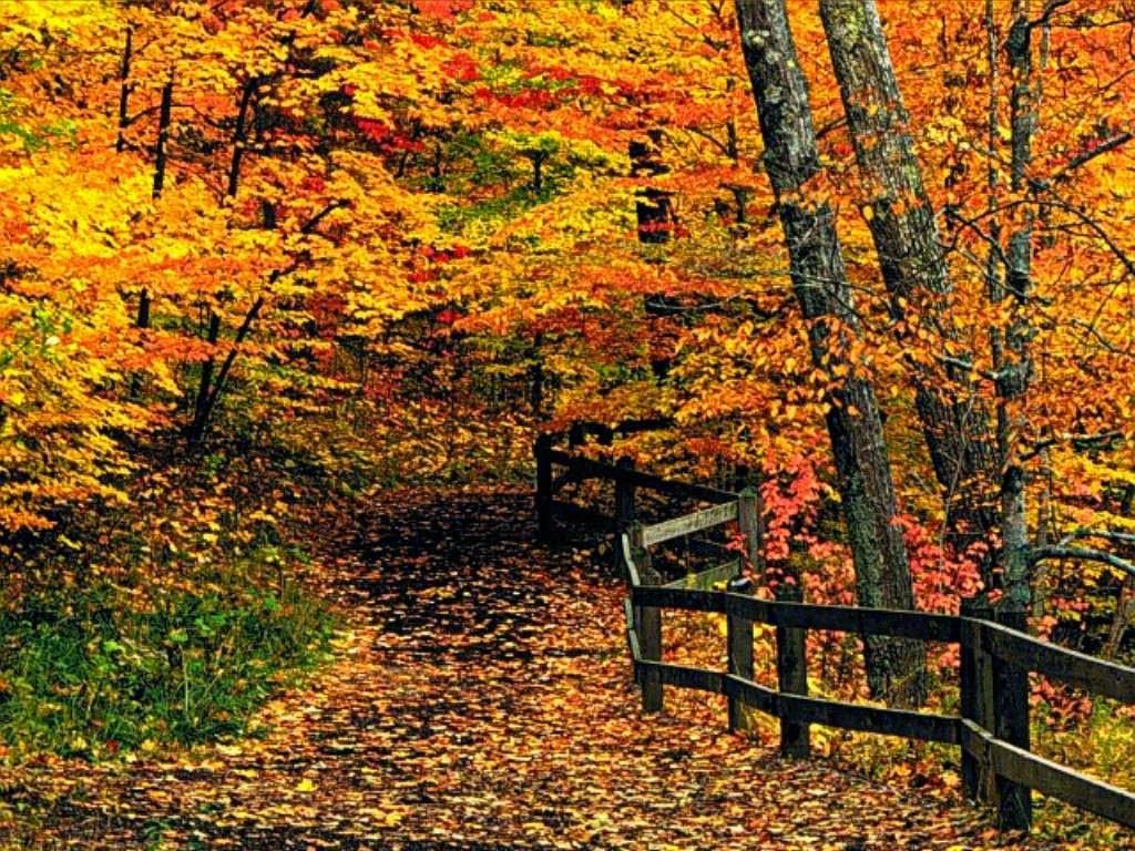 Argomenti stagionali: l'autunno.