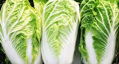 Berbagai Macam Manfaat Sayur Sawi