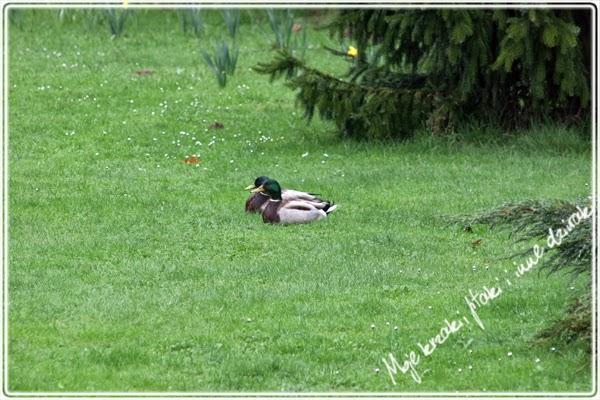 miłość wsród zwierząt i ptaków wiosną