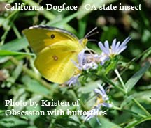 North American Butterfly Association ~ Orange County Chapter