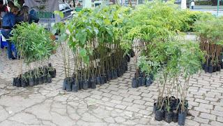 Prefeitura de Teresópolis comemora Semana do Meio Ambiente. Ação ambiental contará com distribuição de mudas e de material informativo.