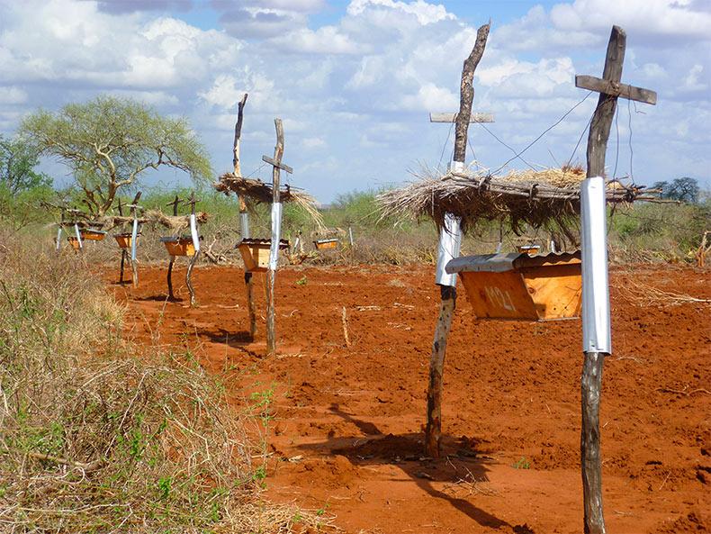 Las cercas de colmenas en África Oriental que proteje a las granjas de los elefantes