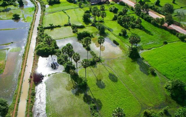 Cultivos y arrozales