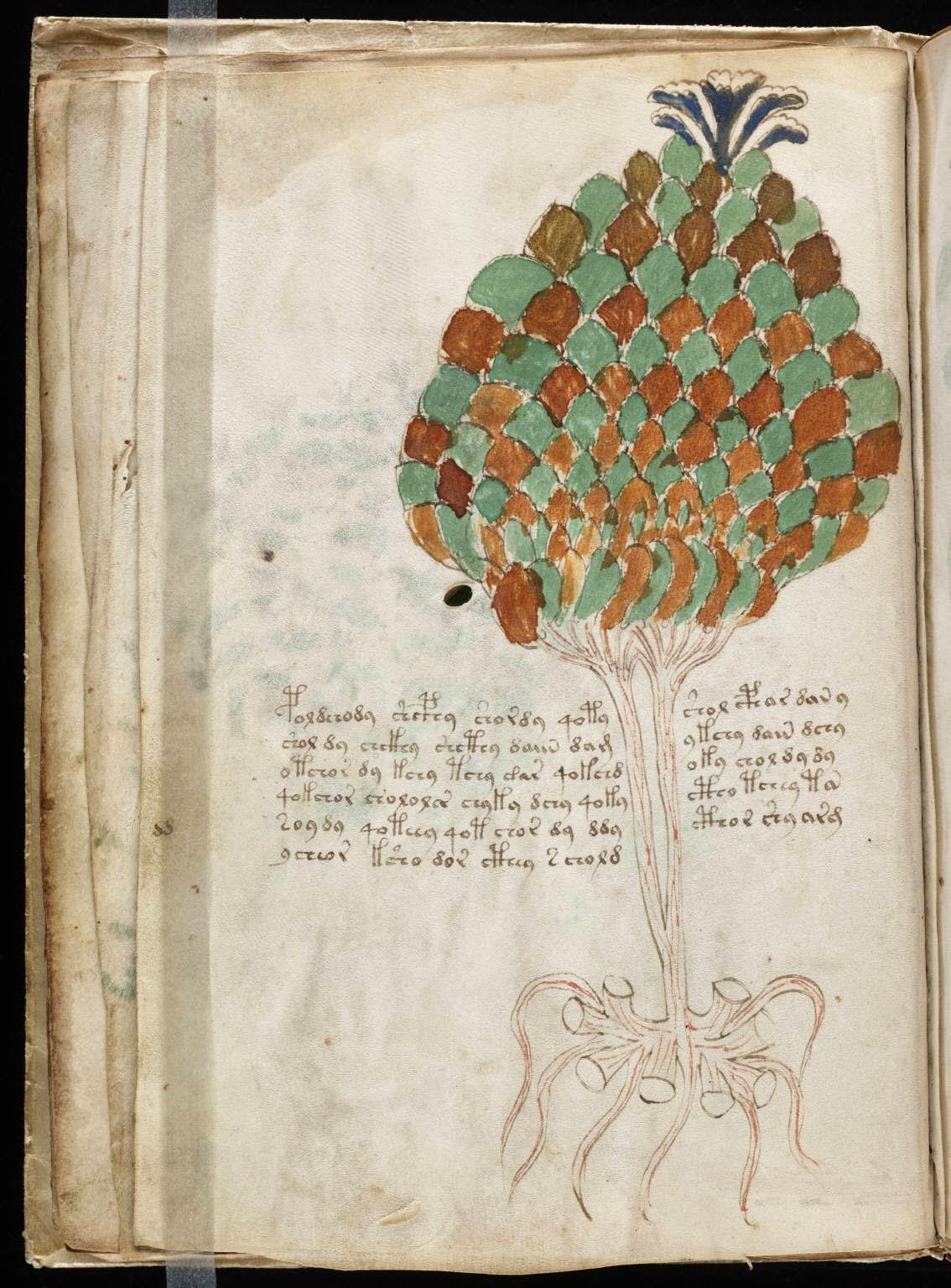 Voynich Manuscript Yale Voynich Manuscript p