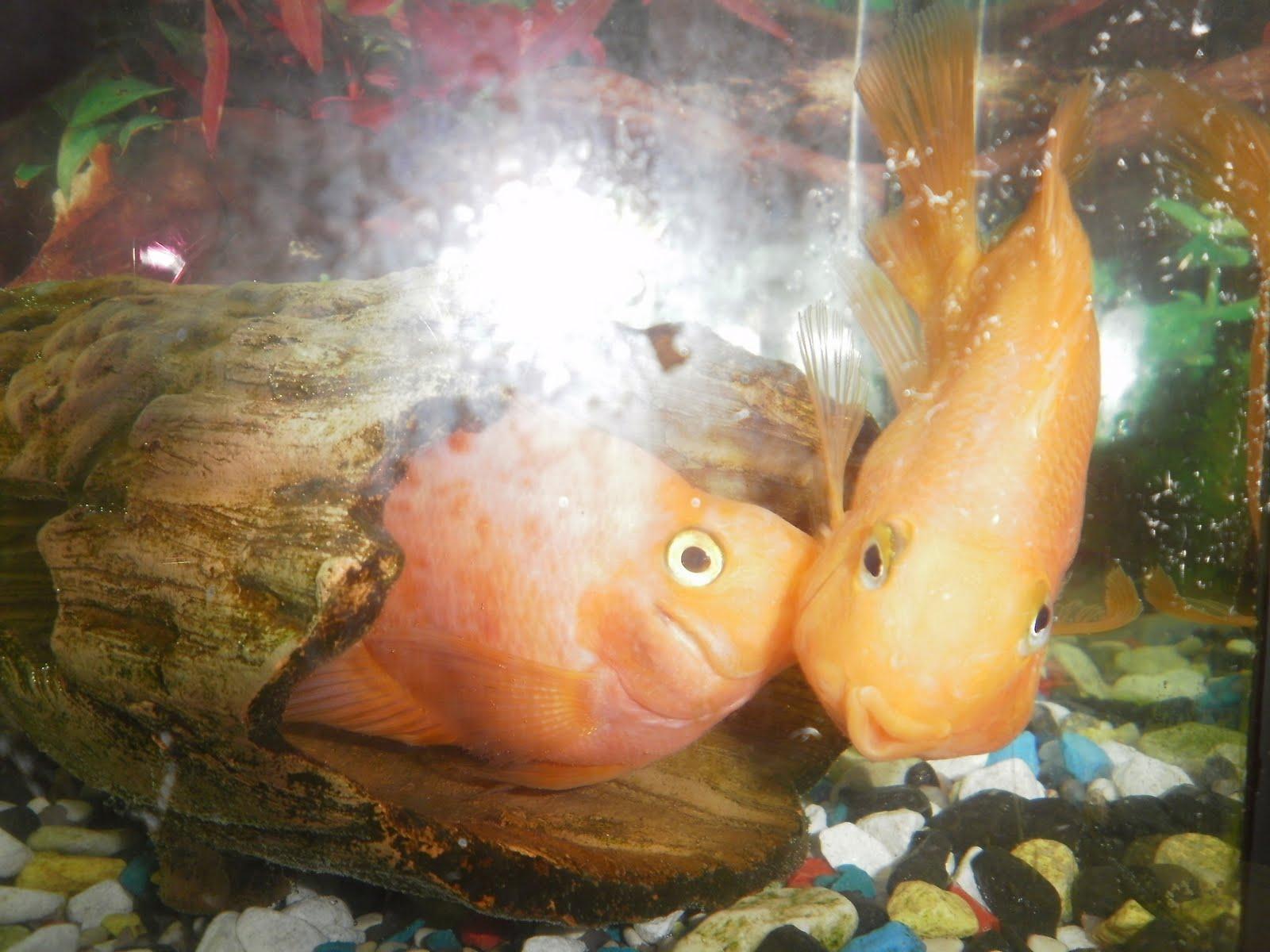 какие рыбки не уживаются