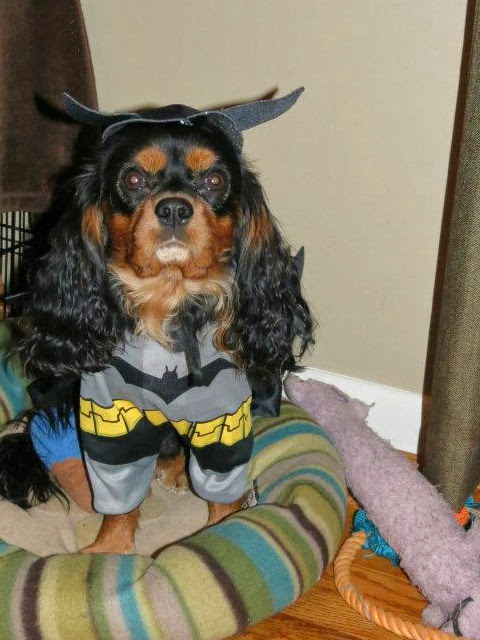 Dog Costume Batman