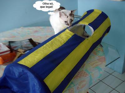 Gata Lili observa o túnel divertido para gatos