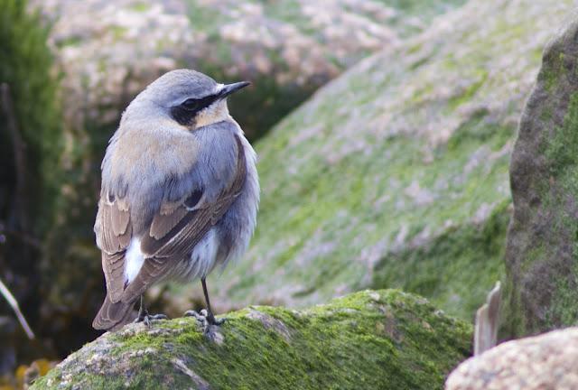 Birds, Birding, Rainham, RSPB, Photography