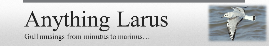 Anything Larus