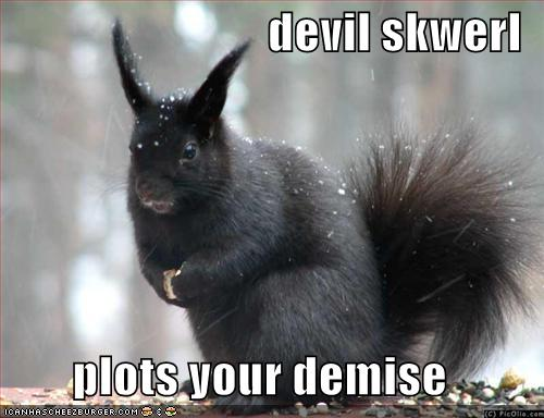 Funny Squirrels pictures |Funny Animal