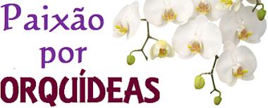 Blog das Orquídeas