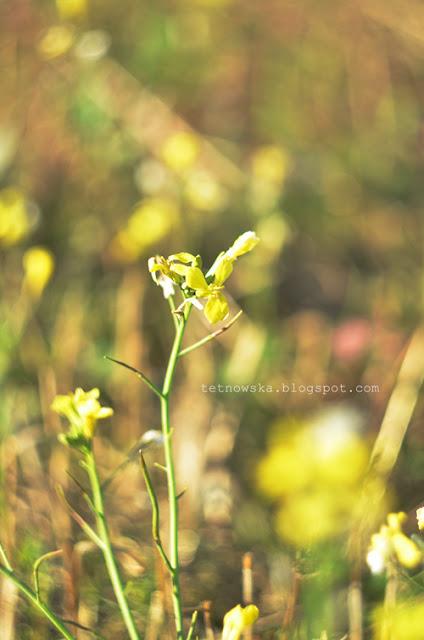 helios, fotografia, jesień, zdjęcia