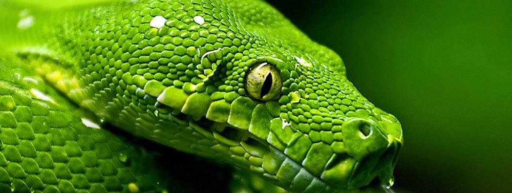 Serpenti di tutto e di pi sensi dei serpenti - Serpente collegare i punti ...