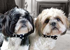 Holly&Lil Bow tie Collars