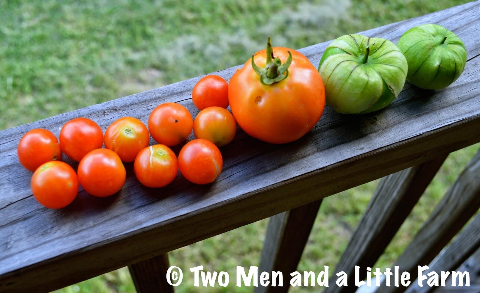 Wartime Kitchen Garden Dvd Two Men And A Little Farm June 2014