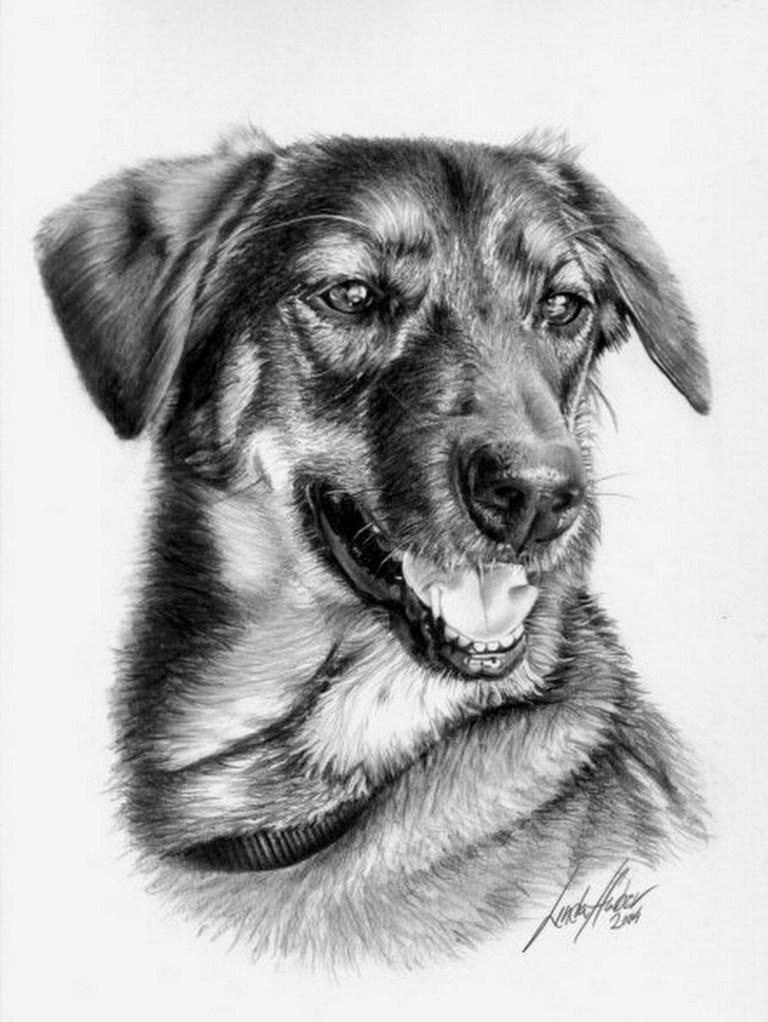 Dibujos de animales a lapiz - Imagui
