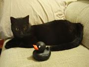 Etiquetas: A caminho da loucura, efeitos secundários de um gato preto, .