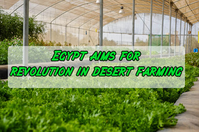 Egypt aims for revolution in desert farming